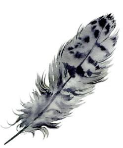 plume.1